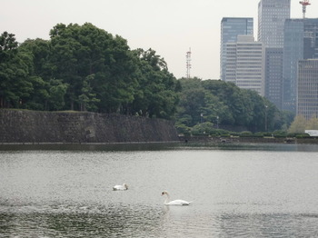 Swan0702