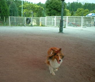 Dogcom_r_2