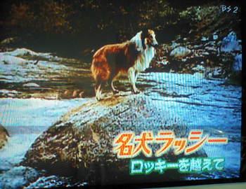 Lassie_rock