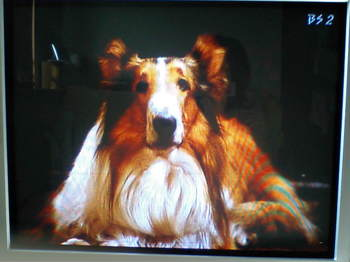 Lassie_rocky