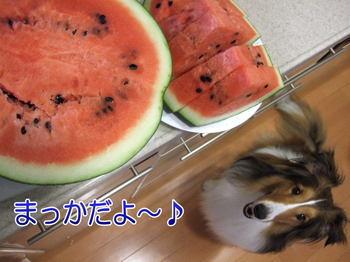 Suika_pjpg